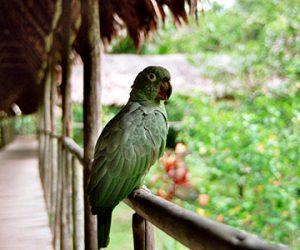 Conociendo Iquitos