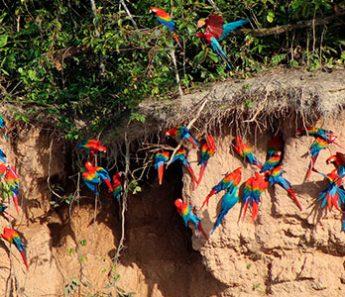Eco Jungle: Reserva Nacional Tambopata – Lago Sandoval