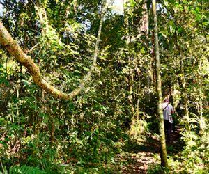 Paquete Mapacho Amazónico Iquitos
