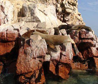 Paracas: Islas Ballestas y Reserva desde Paracas