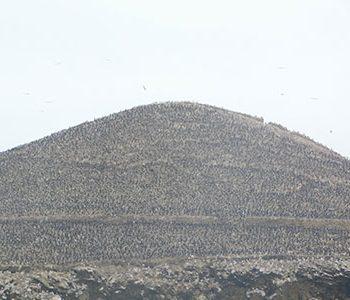 Reserva Nacional de Paracas y Playas (Desde Paracas)