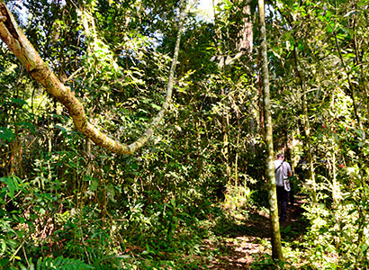 Selva y Naturaleza